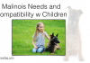 Malinois FAQ 001 – Needs of the Breed and Compatibility with Children
