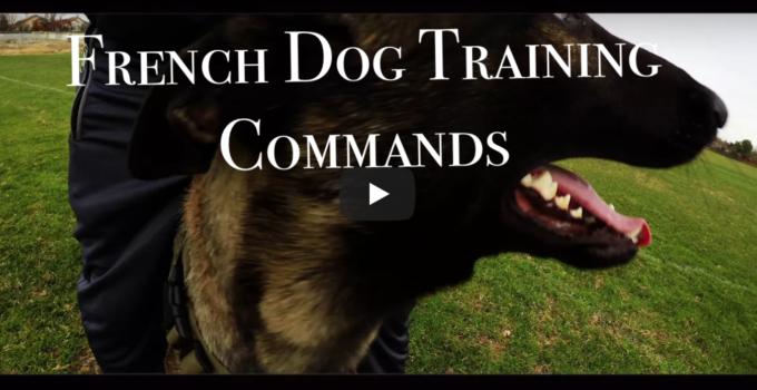 Belgian Malinois Training Youtube - Marcpous